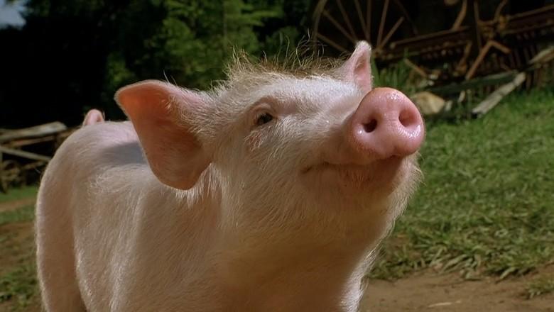 Babe, o Porquinho Atrapalhado (Foto: Reprodução)