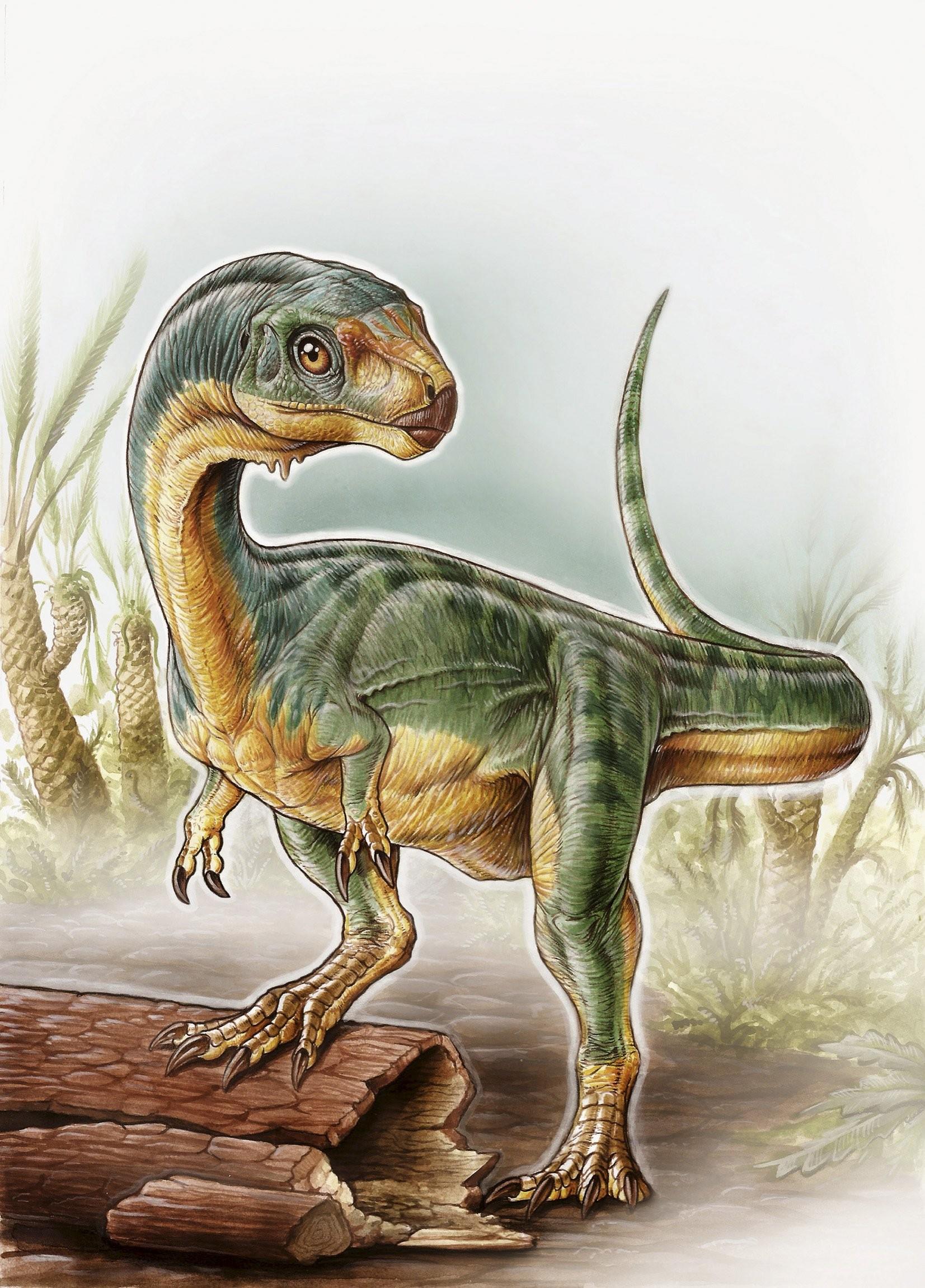 Ilustração mostra exemplar da nova espécie de dinossauro batizada de 'Chilesaurus diegosuarezi' (Foto: Gabriel Lio/University of Birmingham/Reuters)