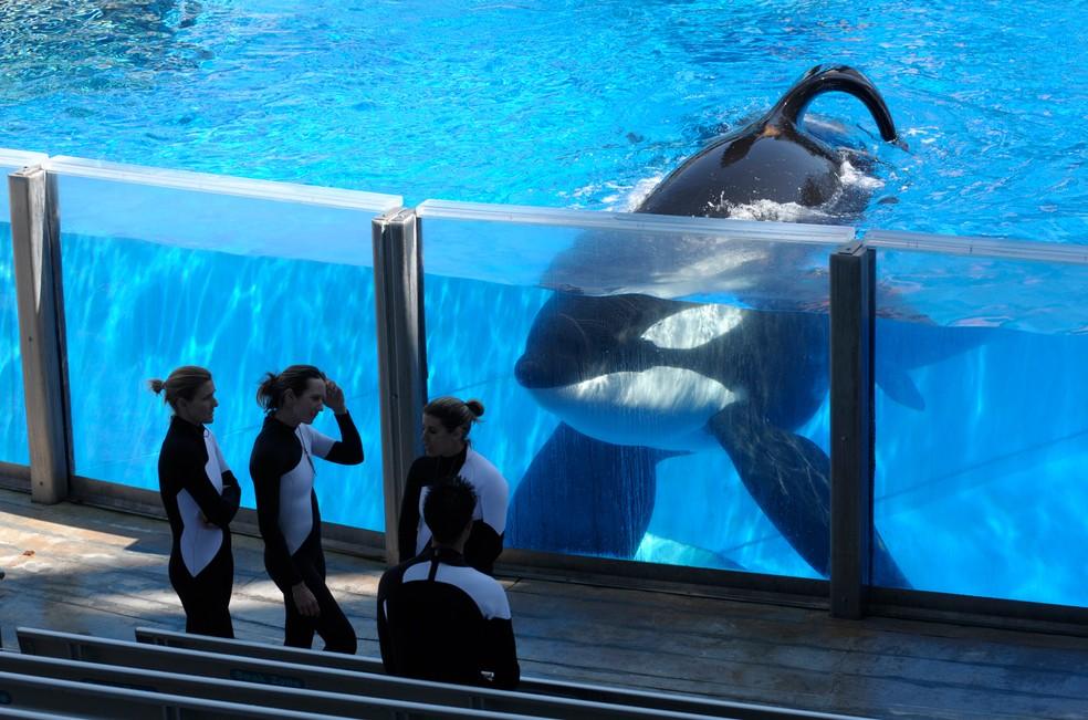 Em foto de 2011, a baleia Tilikum é vista no SeaWorld Orlando peto de suas treinadoras  (Foto: AP Photo/Phelan M. Ebenhack, File)