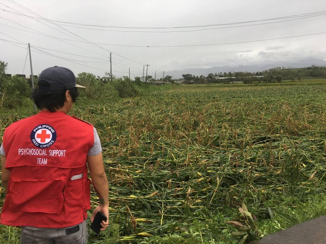 Funcionário da Cruz Vermelha observa destruição em plantação de milho após a passagem do tufão Mangkhut em Ilagan, nas Filipnas