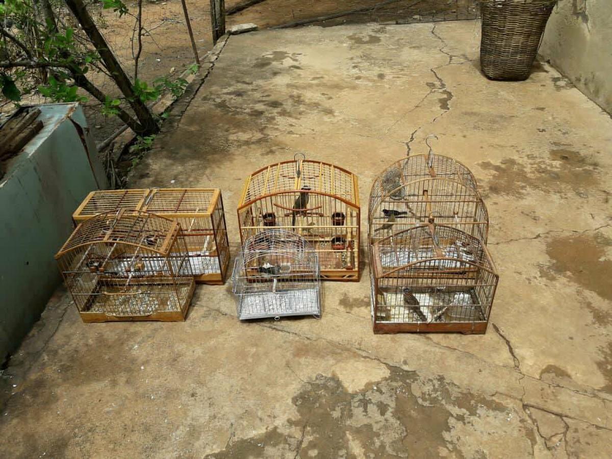 Homem é detido com pássaros silvestres e espingardas em São Fidélis, no RJ