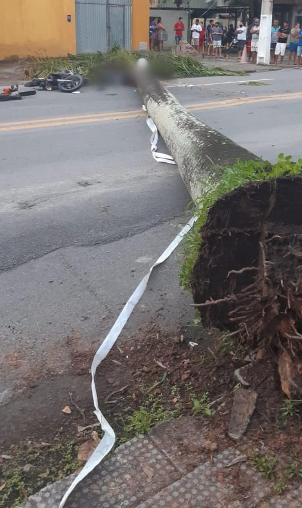 Palmeira imperial cai em cima de motociclista  — Foto: Divulgação/Corpo de Bombeiros