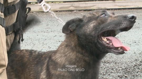Cão de SC é o 1º no Brasil a receber certificação internacional em treinamento avançado