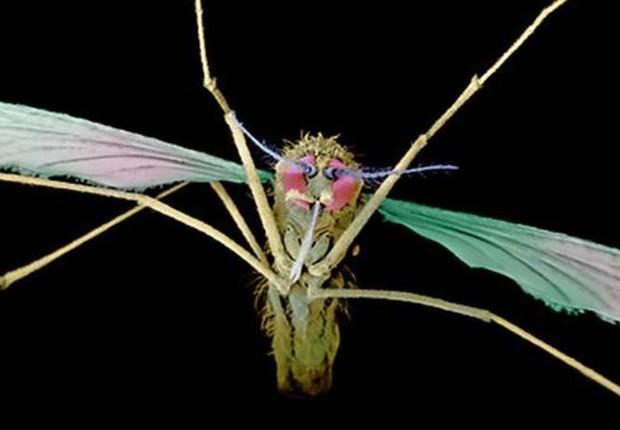 Nova droga é capaz de eliminar parasitas - que entram no corpo humano por picada de mosquito - com apenas uma dose (Foto: Fotop Science Photo Library)