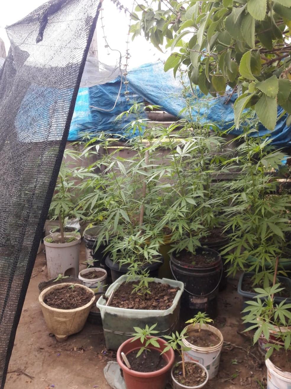 Polícia recolheu os casos (Foto: Baep/Divulgação)