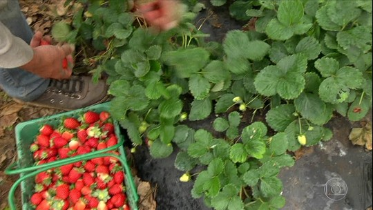 Produção orgânica cresce na Bahia com certificação participativa