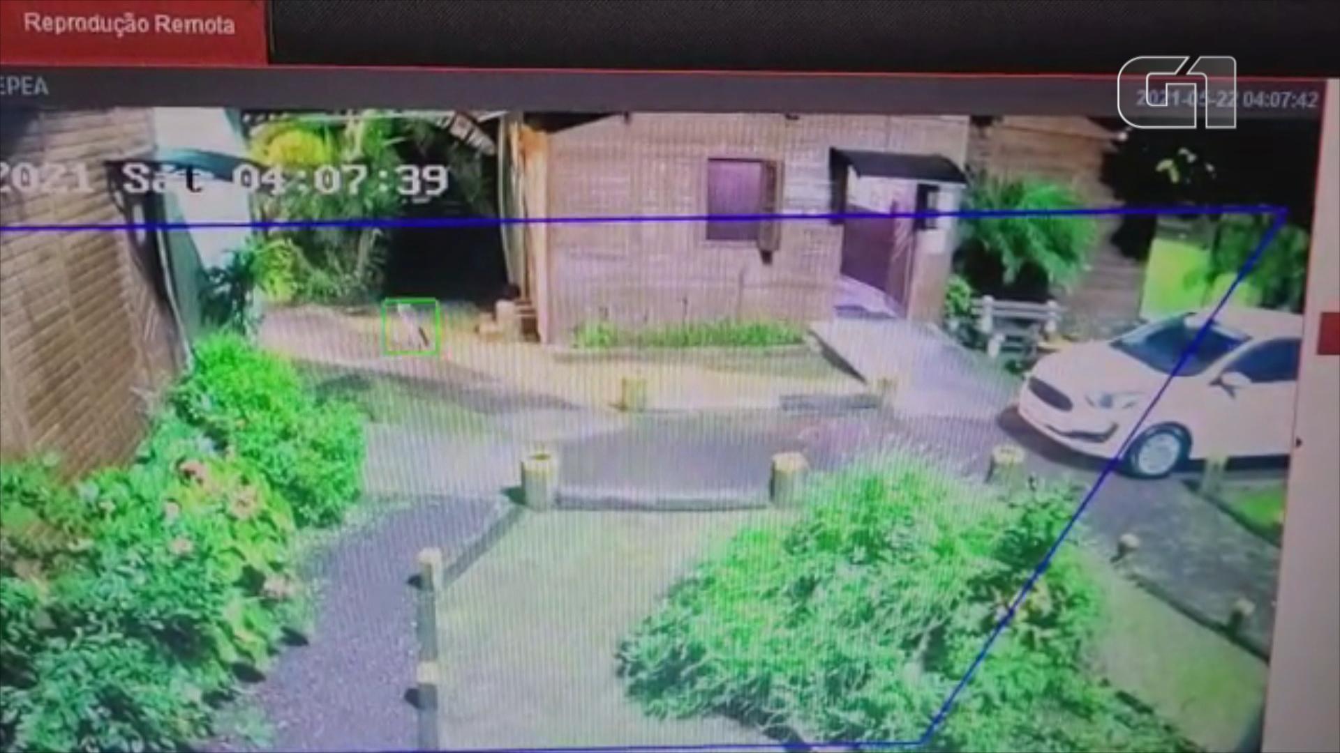 Graxaim-do-mato é flagrado por câmeras em parque de São Leopoldo