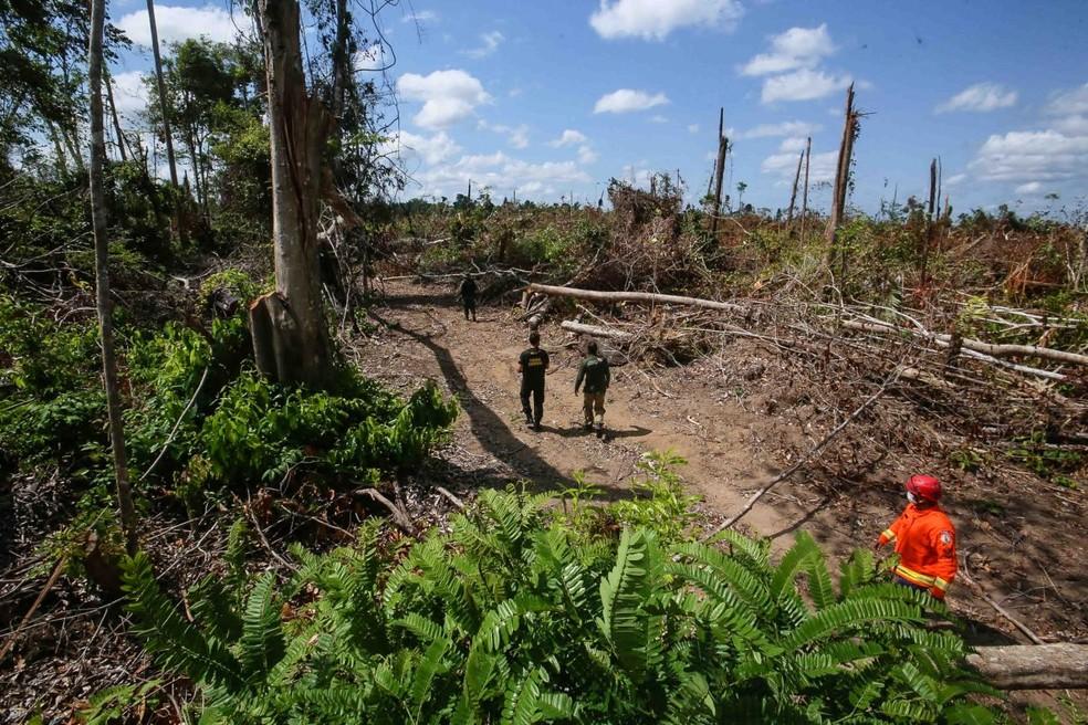 Operação Amazônia Viva em Moju, no Pará — Foto: Reprodução / Agência Pará