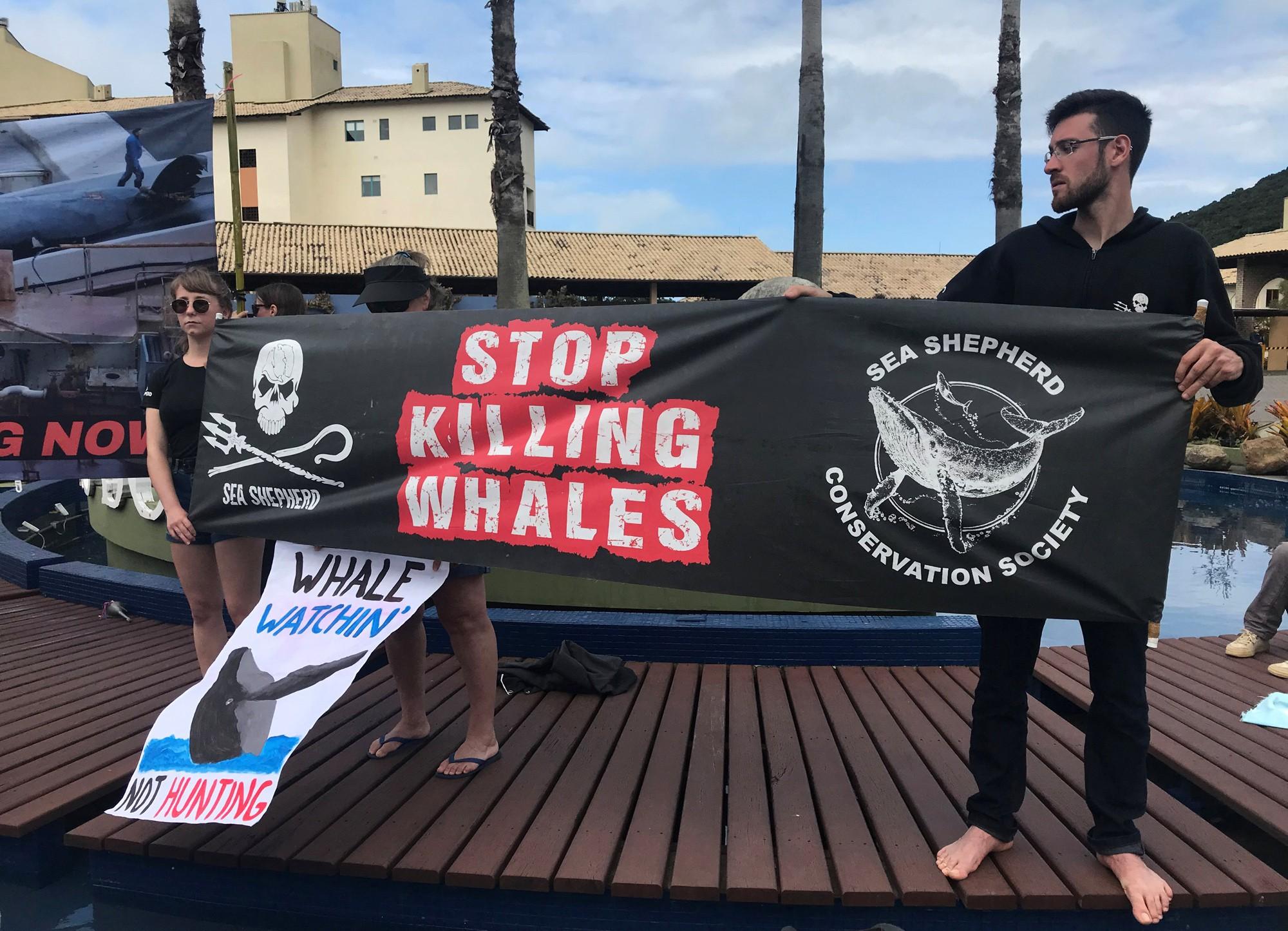 Comissão analisa proposta para liberar caça comercial de baleias; entenda o que está em jogo