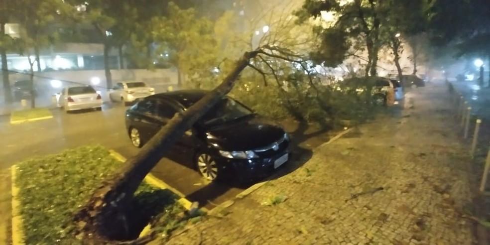Árvore caiu sobre carro na região de Jacarepaguá, Zona Oeste do Rio — Foto: Arquivo pessoal