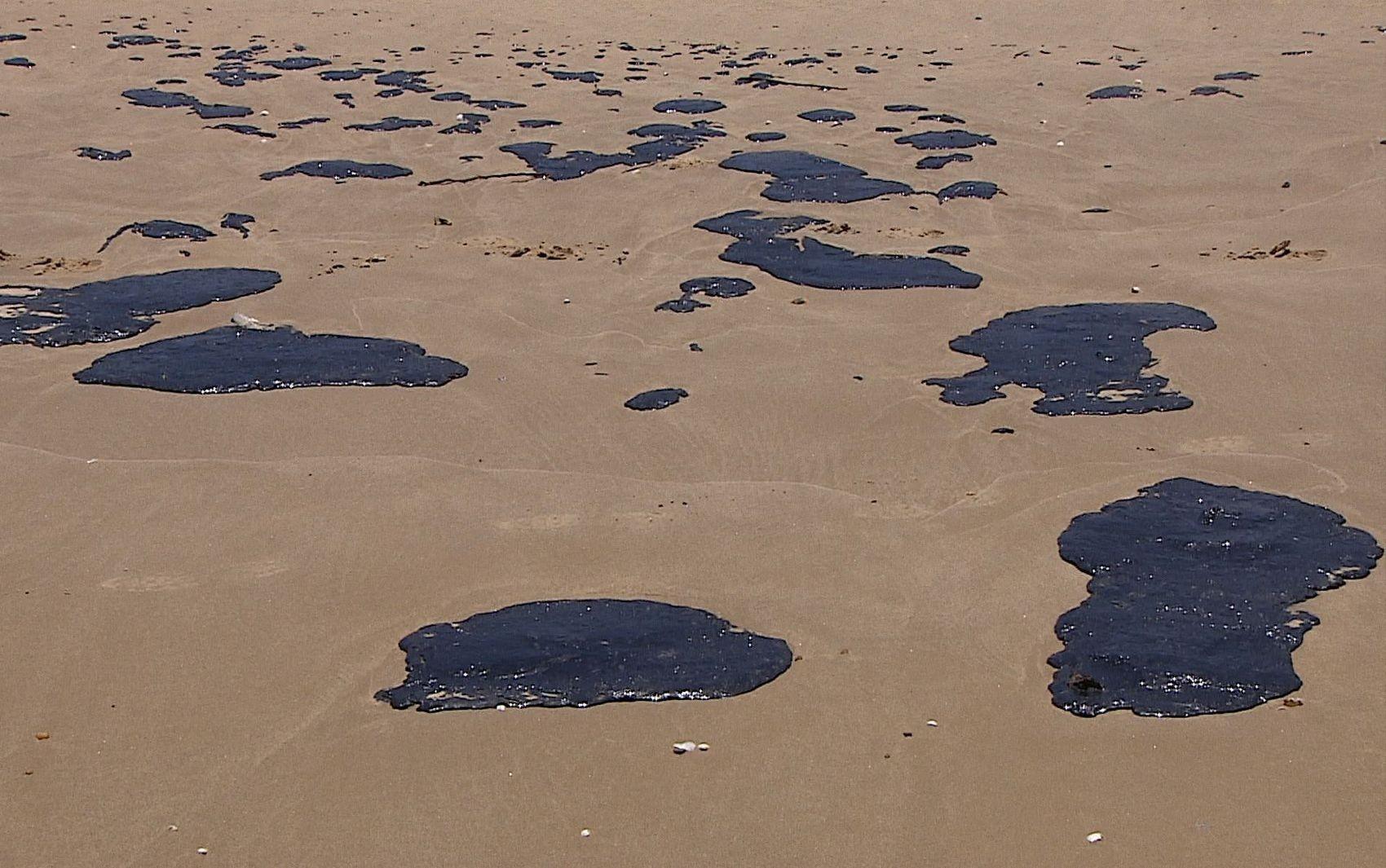 Adema investiga se morte de crustáceos na Foz do Velho Chico tem relação com as manchas de óleo  - Notícias - Plantão Diário