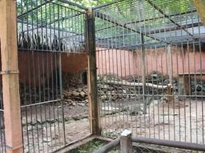 Morte da única tigresa do zoológico de Teresina deixa tratador de 'luto' | Piauí | G1