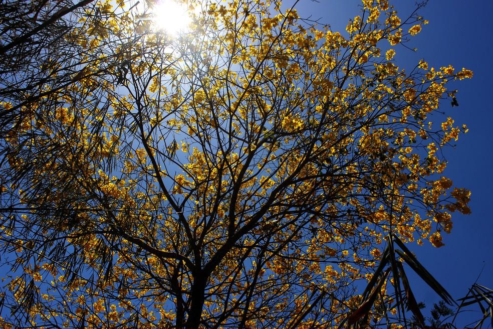 A baixa umidade de ar no Piauí irá durar até o fim da primavera, diz meteorogista. — Foto: Simone Rodrigues/ Arquivo Pessoal