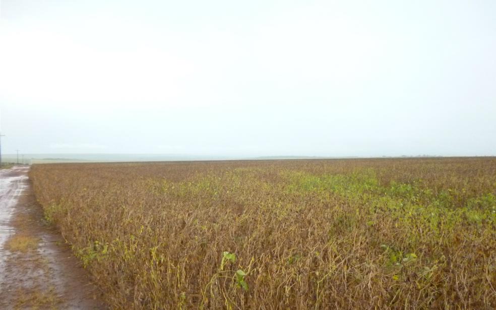 Herbicida é utilizado para o combate de ervas daninhas em diversas culturas, como em plantações de soja  (Foto: Werneck Almada/ Divulgação Ibama)