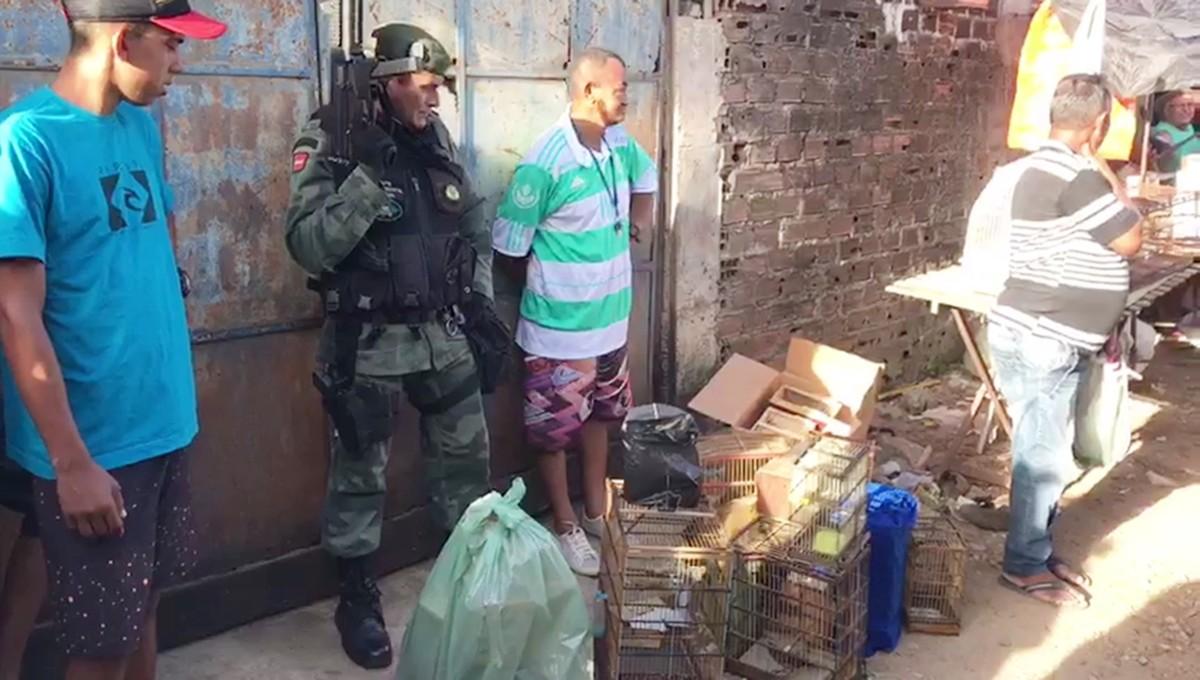 Polícia Ambiental prende dois e apreende mais de 40 aves em feira de João Pessoa