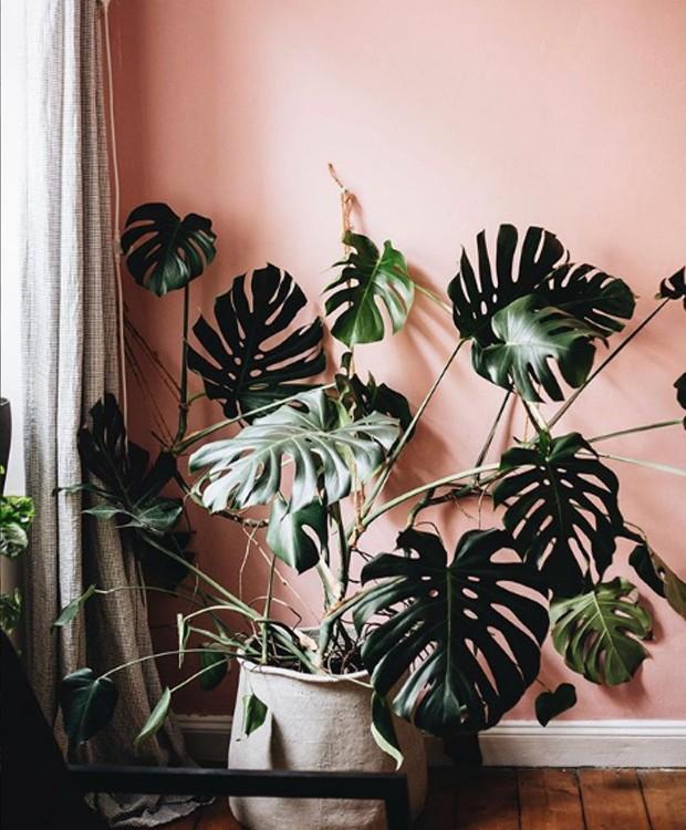 A monstera é perfeita para dar um ar tropical a qualquer ambiente (Foto: Instagram/ Reprodução)
