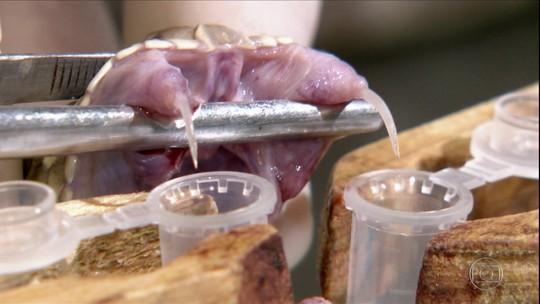 Veneno de cobra gera interesse para produção de medicamentos