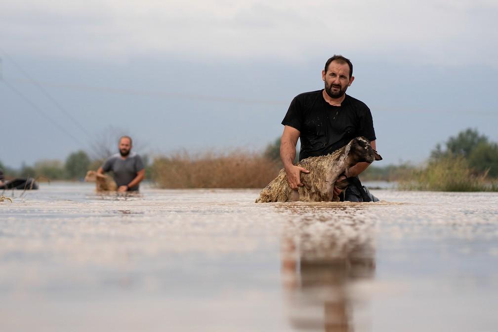 Criadores de ovelhas tentam salvar seus animais de uma área inundada, perto da vila de Megala Kalyvia, na Grécia — Foto: Giannis Floulis/Reuters