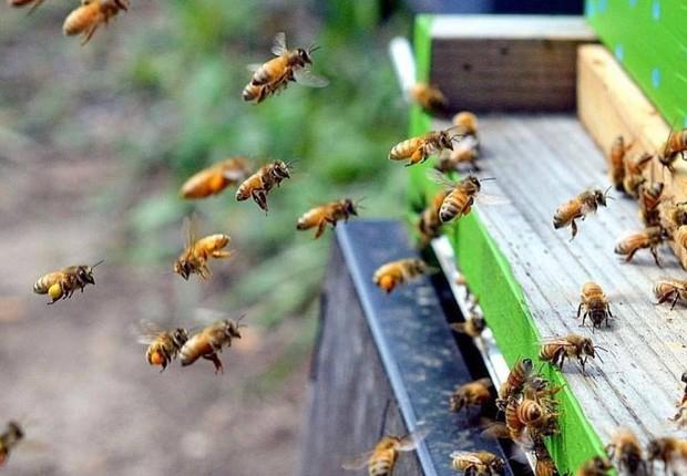 Abelhas (Foto: Reprodução/Facebook The World Bee Project CIC)