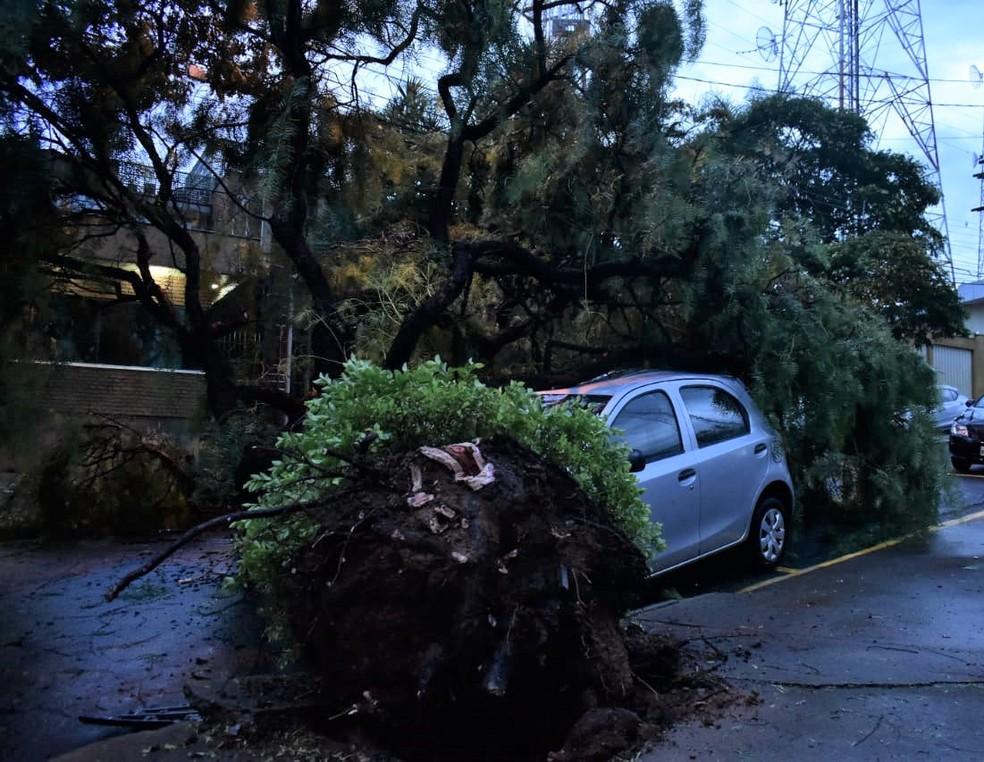 Árvore caiu e atingiu veículo na Rua Regina Nogueira, no Jardim São Gabriel — Foto: Fernando Evans/G1