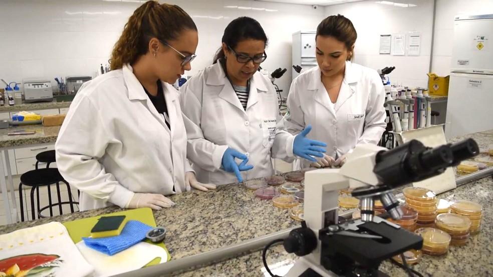 Da esq. para dir., a graduanda Fernanda Baptista, a orientadora Rosana Siqueira e a graduanda Sarah Stocco, da UniMetrocamp, em Campinas. — Foto: Patrícia Teixeira/G1