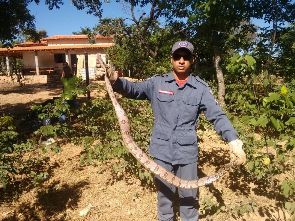 Animal foi capturado na zona rural de Montes Claros (Foto: Corpo de Bombeiros/ Divulgação)