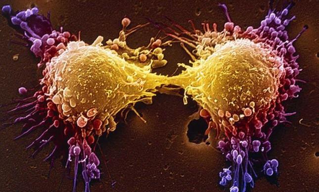 Câncer, células se dividindo