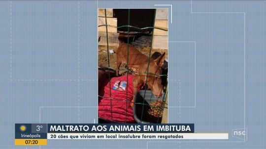 Vigilância em Saúde resgata cães em condições inadequadas em usina de reciclagem no Sul de SC