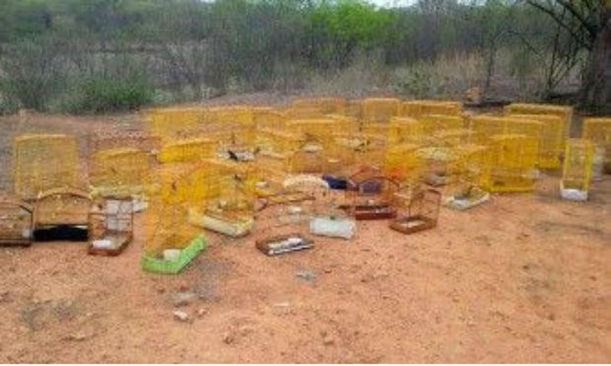 Homem é detido suspeito de manter pássaros em cativeiro em Serra Talhada