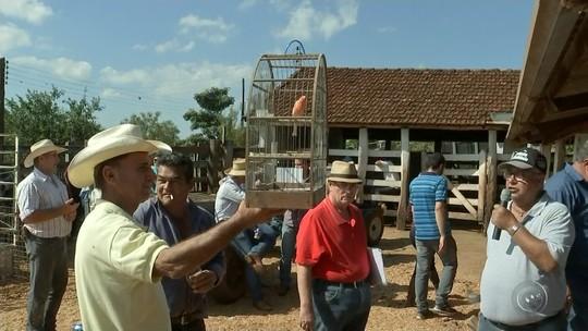'Leilão caipira' reúne itens como abóbora de 35 quilos, linguiça de 4 metros e pizza gigante em Mineiros do Tietê