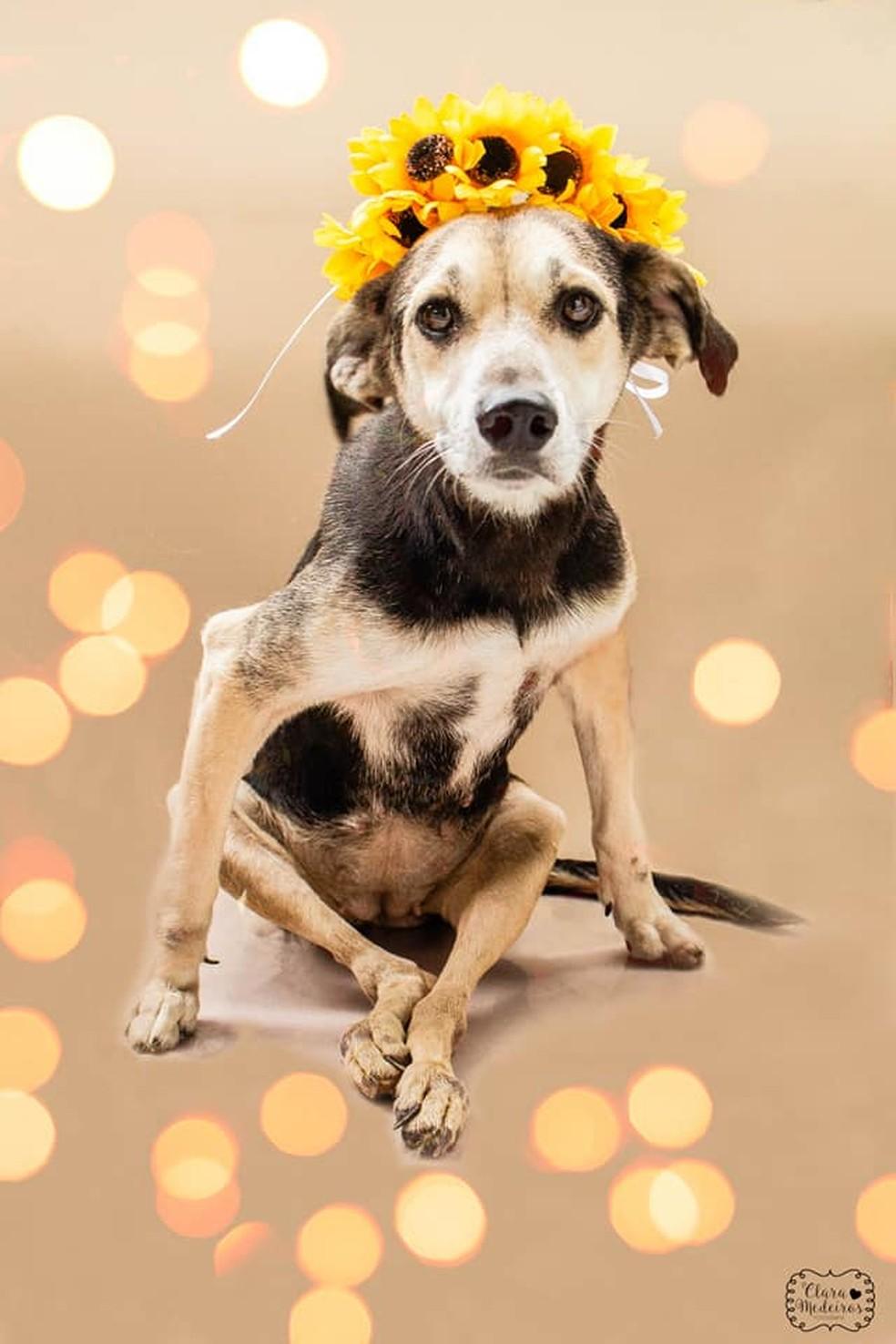 'Todos os animais disponíveis para adoção têm condições plenas de saúde', contou a diretora social da Suipa (Foto: Divulgação/ Clara Medeiros)