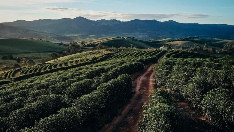 Cena do cafezal da Fazenda IP, do Grupo Sertão, que atua hoje em todo o ciclo do café do campo à xícara (Foto: Selva Bizarria)