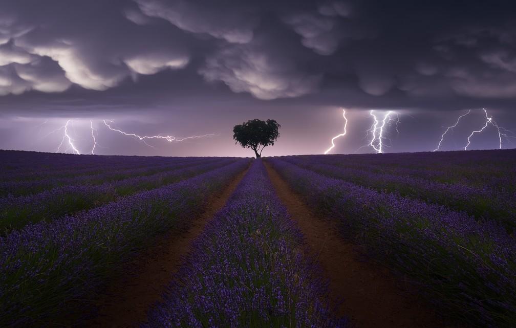 Paisagem: 'Electric Storm on Lavender', imagem que captura o momento em que raios atingem um campo florido de lavanda em Guadalajara, na Espanha — Foto: Juan López Ruiz (Espanha)/Sony World Photography Awards