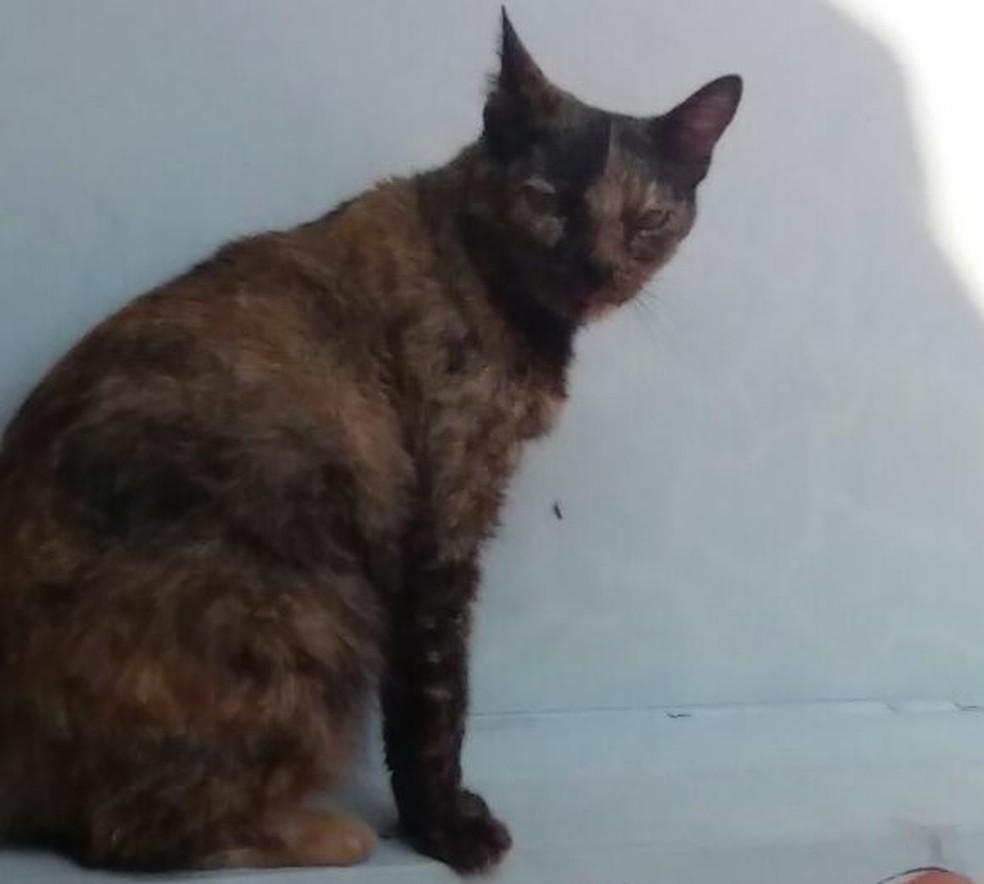 """Saura não quis entrar em casa e ficou """"encarando"""" a família que adotou uma nova gatinha em sua ausência  (Foto: Arquivo Pessoal/Divulgação)"""