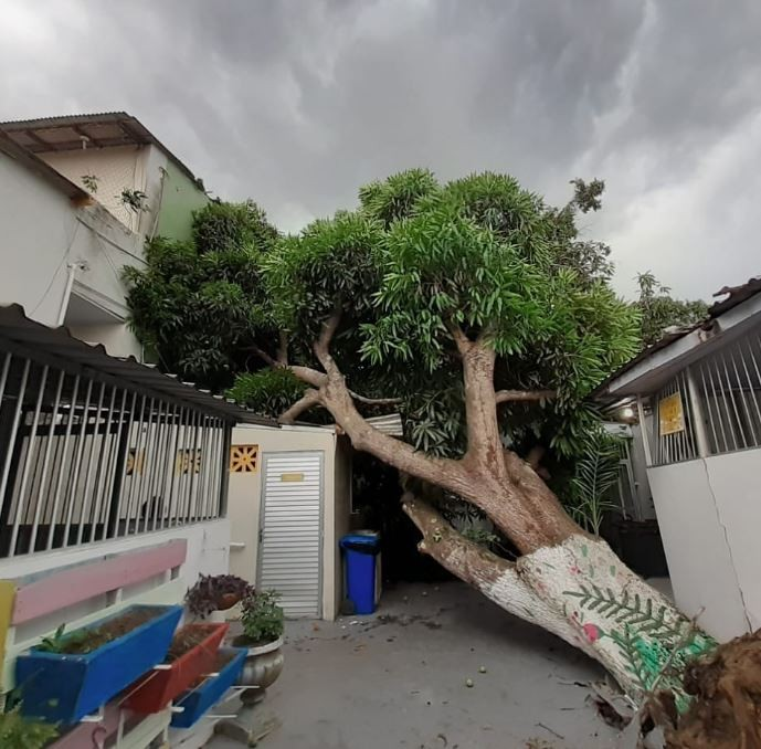 Árvore tomba e atinge estrutura do Lar Batista Janell Doyle, na Zona Leste de Manaus - Notícias - Plantão Diário