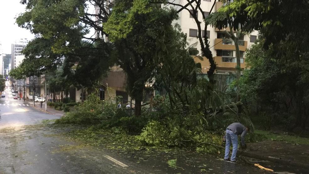 Árvore caída no Parque da Luz, no Centro de Florianópolis. — Foto: Celesc