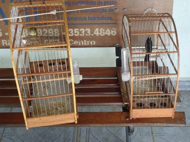 Pássaros apreendidos pela Guarda Civil Municipal de Rio Claro (Fot Guarda Municipal de Rio Claro/ Divulgação)
