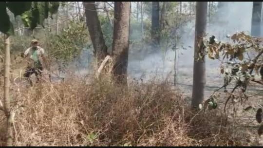 Fogo atinge 34 hectares de reserva florestal em Batatais, SP