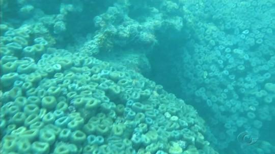 Expedição encontra recifes de corais ameaçados de extinção em Alagoas