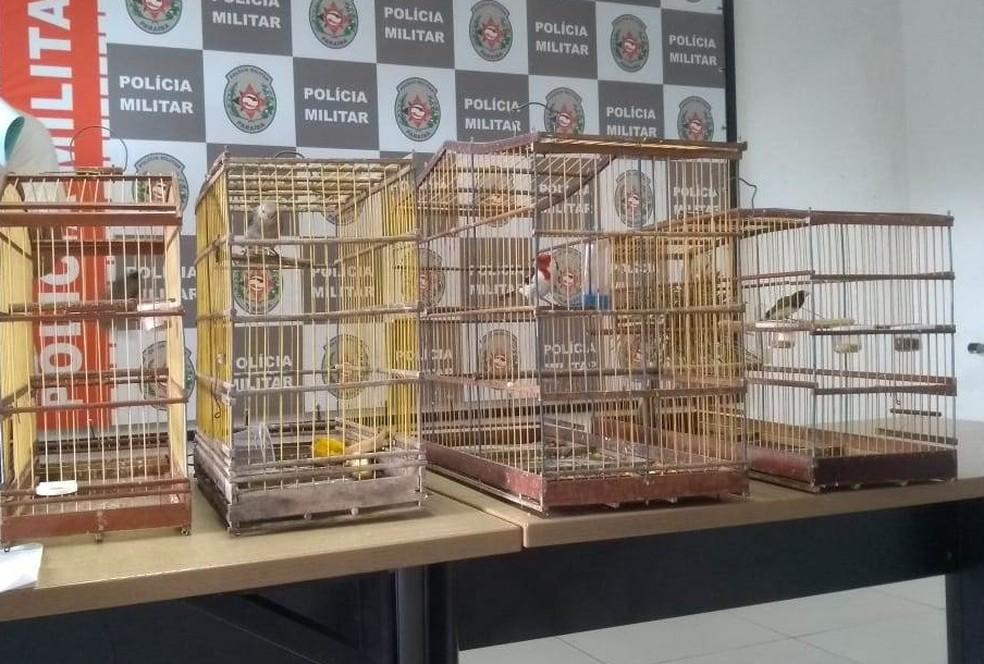 Outros quatro pássaros que estavam na casa do suspeito foram apreendidos pela PM — Foto: Divulgação/Polícia Militar