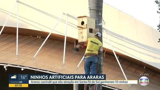 Projeto instala ninhos artificiais para Araras-canindé se reproduzirem em Santa Fé do Sul