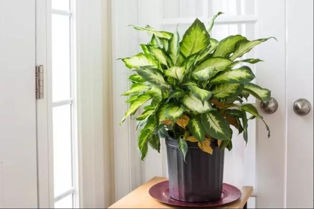 Plantas ornamentais venenosas: conheça 5 espécies tóxicas que exigem cuidados especiais (Foto: Reprodução/ Pinterest)