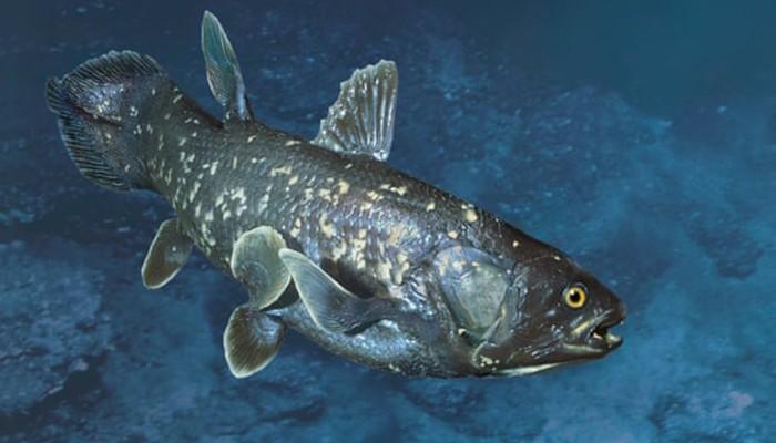Espécie foi considerada extinta por milhões de anos (Foto: Getty Images)
