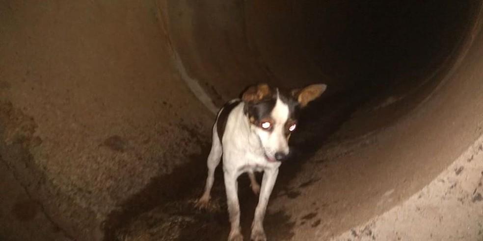 Cachorro não aparentava ter ferimentos e fugiu assim que foi colocado no chão — Foto: Defesa Civil/Divulgação