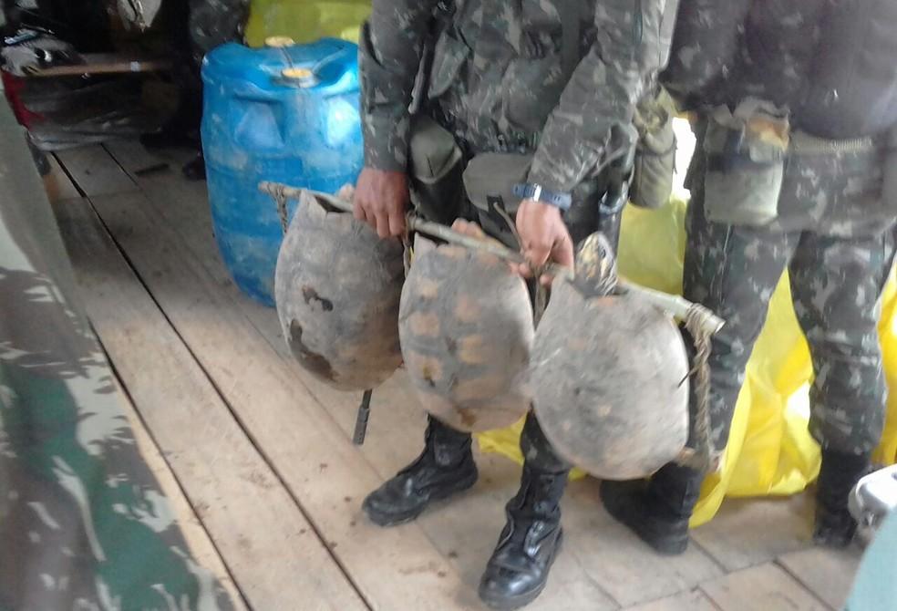 Jabutis também foram apreendidos pelo Exército (Foto: Exército/Divulgação)