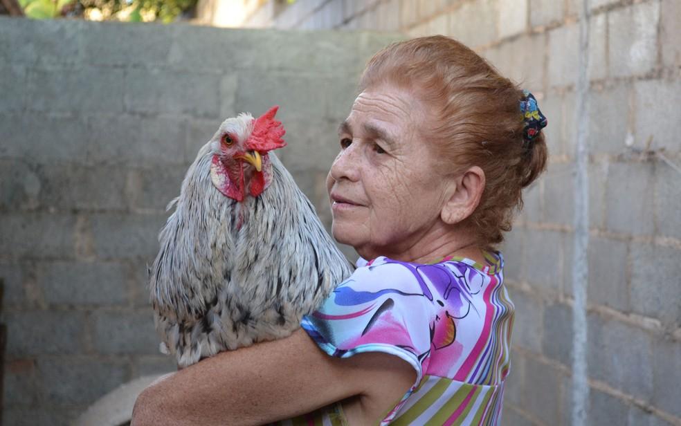O galo Bóris no colo da 'mãe', a aposentada Noêmia Maria da Silva — Foto: Werlon Cesar/G1