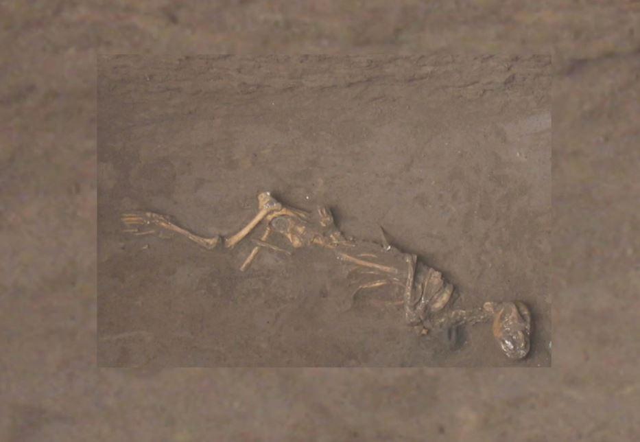 Arqueólogos encontram vestígios de cachorros sacrificados há 9 mil anos