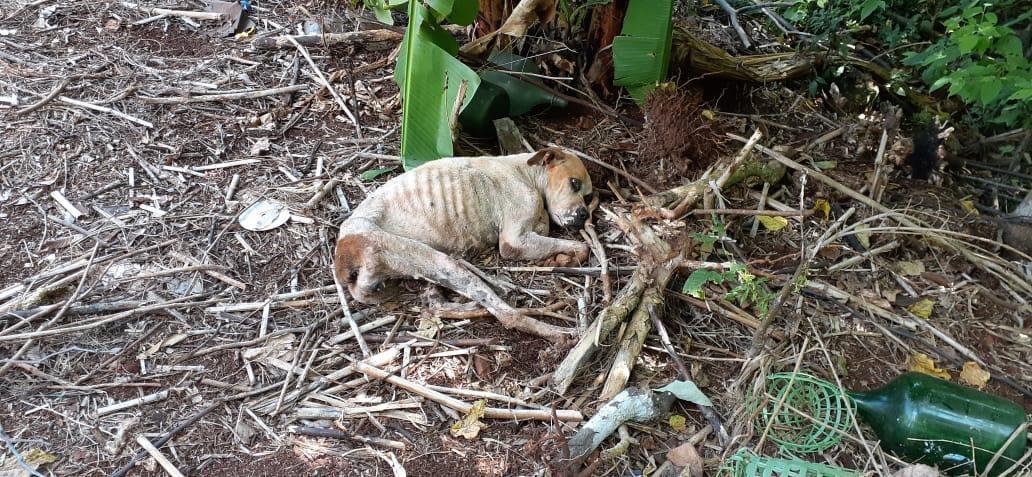 Cadela é encontrada abandonada em propriedade rural sem comida e água, em Capanema