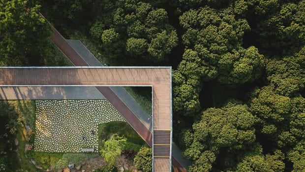 Biblioteca na China tem passarela que atravessa copas de árvores (Foto: Divulgação)