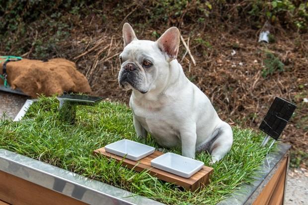 Cachorro  no telhado de casinha sustentável (Foto: DesignBoom/Studio Schicketanz/Reprodução)